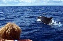 Whalewatching (São Miguel)