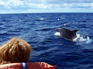 Whale- und Dolphin Watching