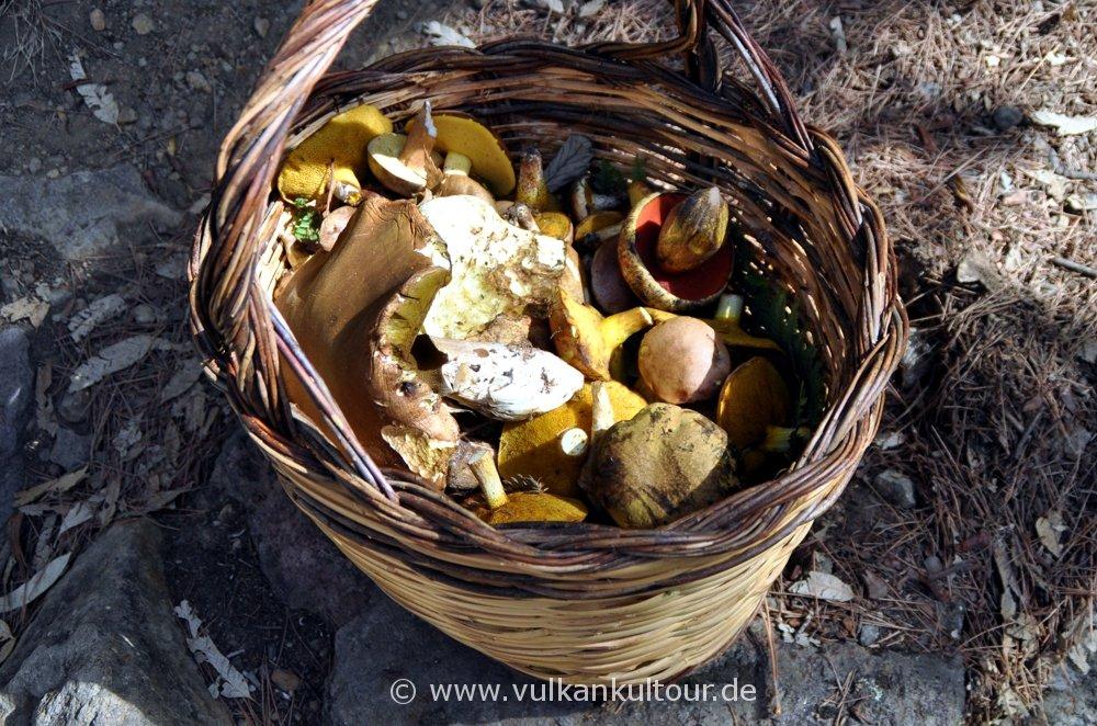 Pilzbeute auf dem Monte Fossa delle Felci (leider nicht unser Korb)