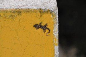 Stromboli Gecko