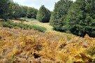 Es wird langsam Herbst am Ätna