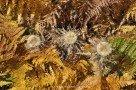 Herbstliche Farne und Disteln