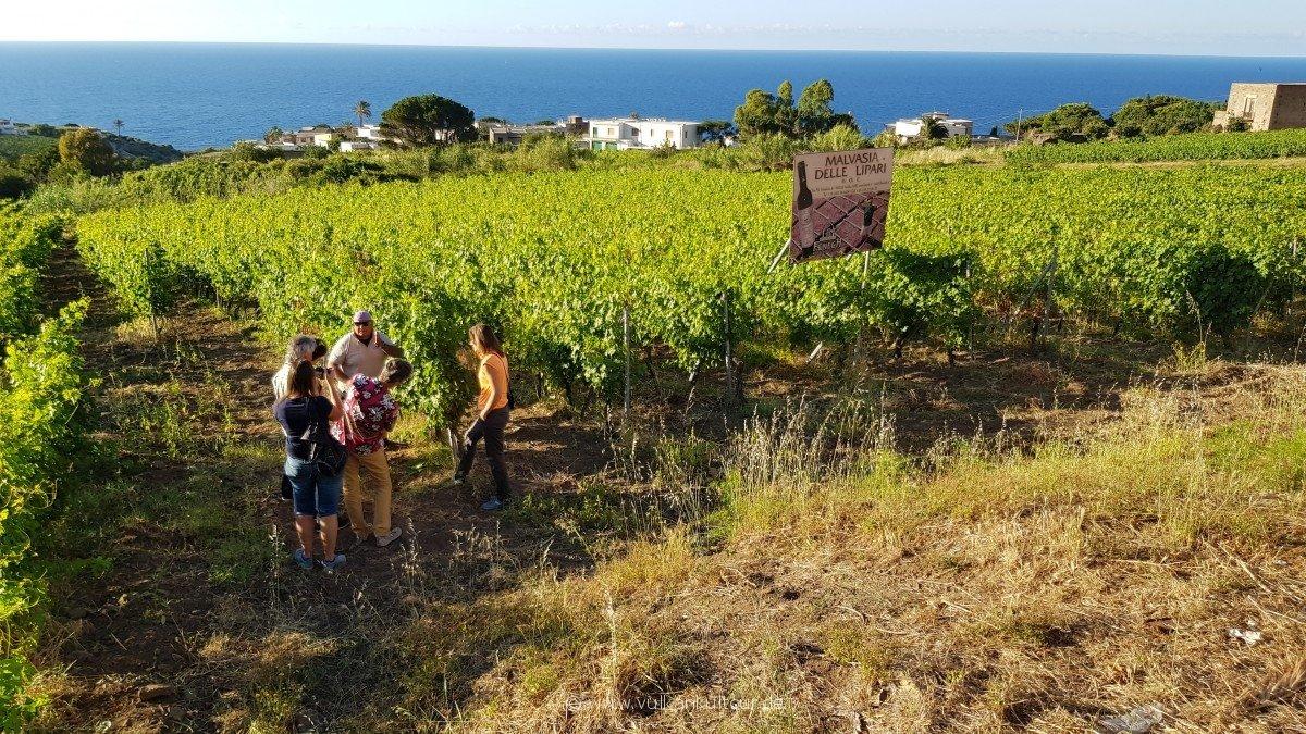 Francesco zeigt uns seine Weinfelder