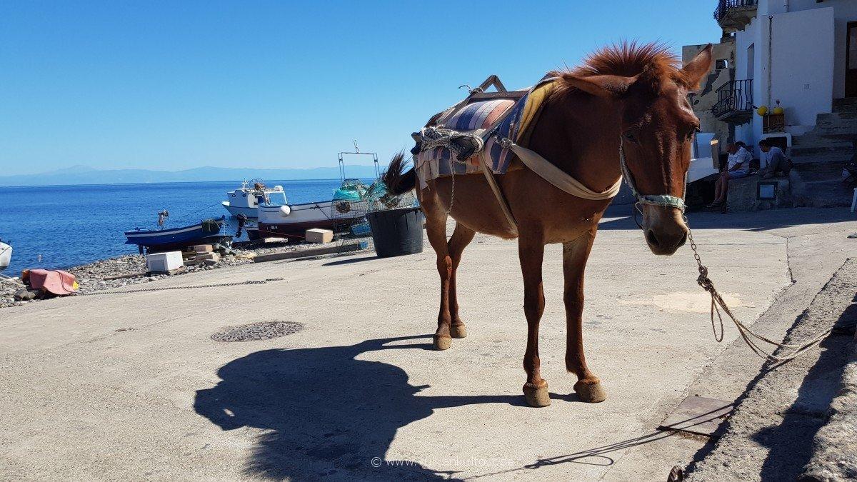 Gepäcktransport auf Alicudisch