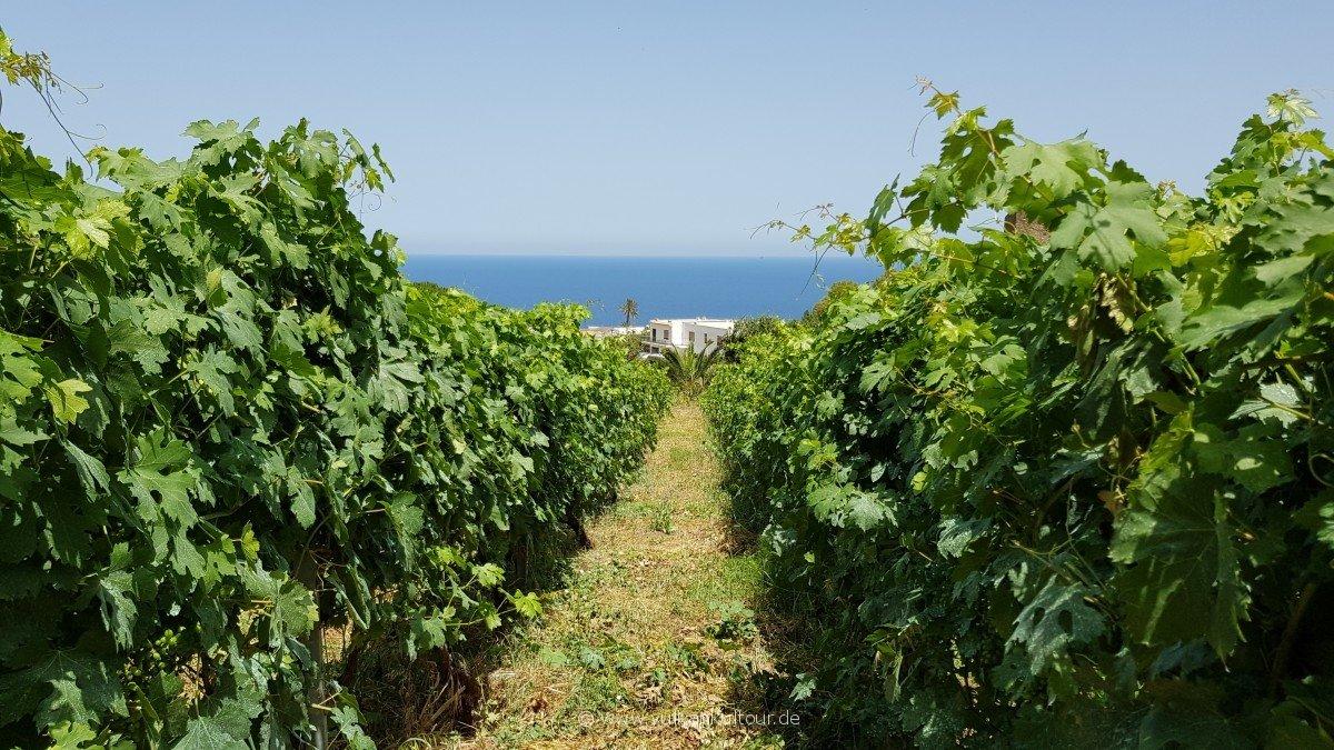 Viele kleine Weinfelder in Malfa / Salina
