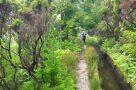 Abstieg vom Lagoa do Fogo an einer kilometerlangen Levada entlang