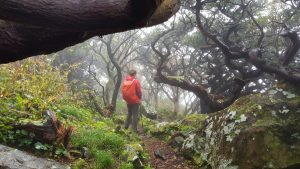 Aufstieg im verwunschenen Nebelwald (Flores Westküste)