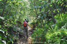 Salina - tropische Vegetation auf dem Monte Fossa delle Felci