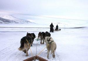 Hundeschlittentour im Adventdalen