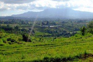 Reisterrassen bei Gumung Kaja