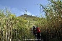 Von der Punta Labronzo durch hohes Schilf zur Feuerrutsche