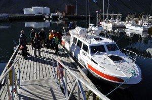 Mit Privatboot nach Hornstrandir