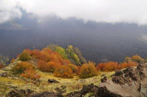 Herbst am Ätna (schiena dell' asino)