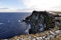 Grímseys Steilküste - ein Vogelparadies