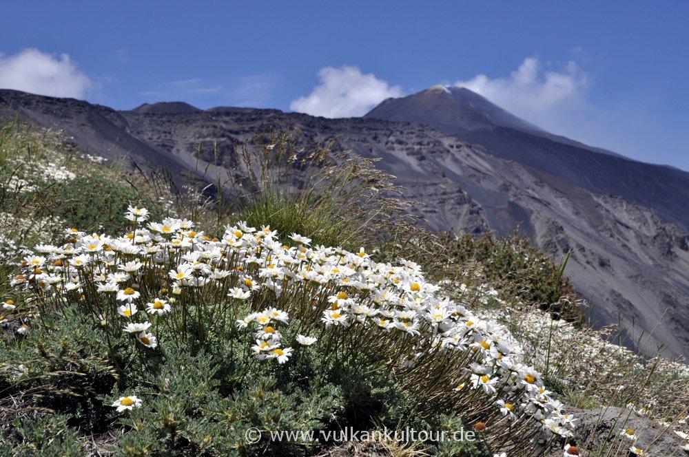 Frühling am Ätna - Blick auf die Gipfelkrater