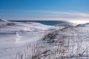 Strandhafer im Schnee