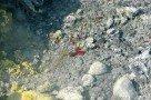 Vulcano - Gran Cratere - Flüssiger Schwefel (© Sergiy Bondarenko)