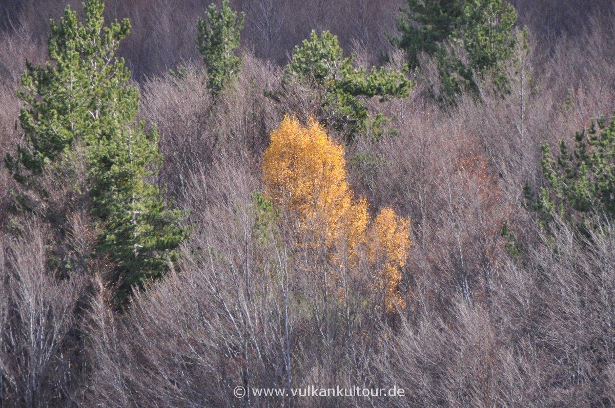 Herbst am Ätna