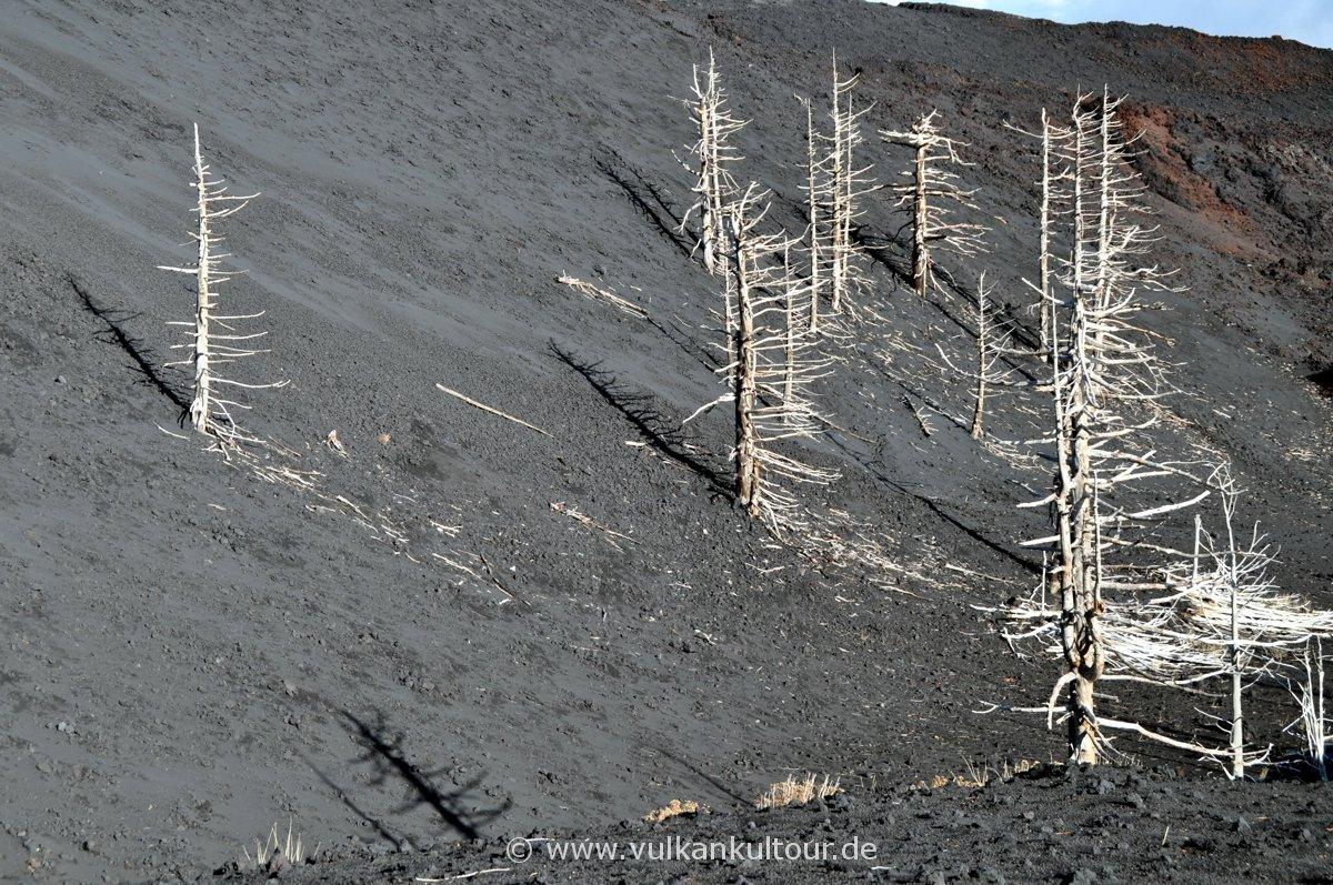 Toter Wald (Ätnaausbruch 2002)