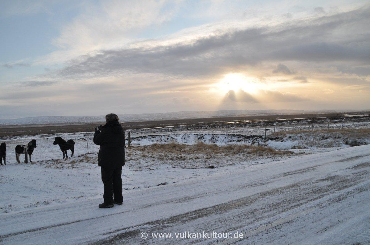 Fotostopp bei den Islandpferden