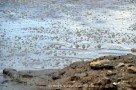 Blubbernder Mudpool im Vulkan Solfatara