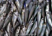 Auf dem Fischmarkt von Catania