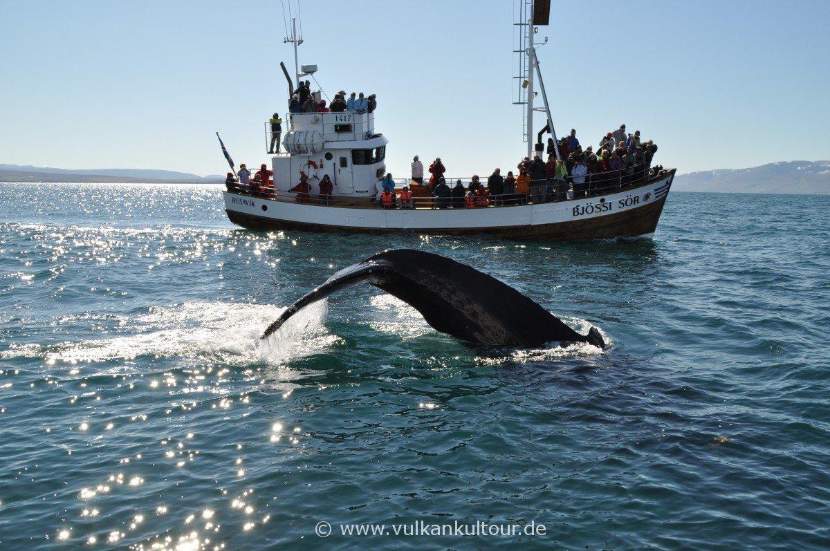 Whale Watching von Húsavík