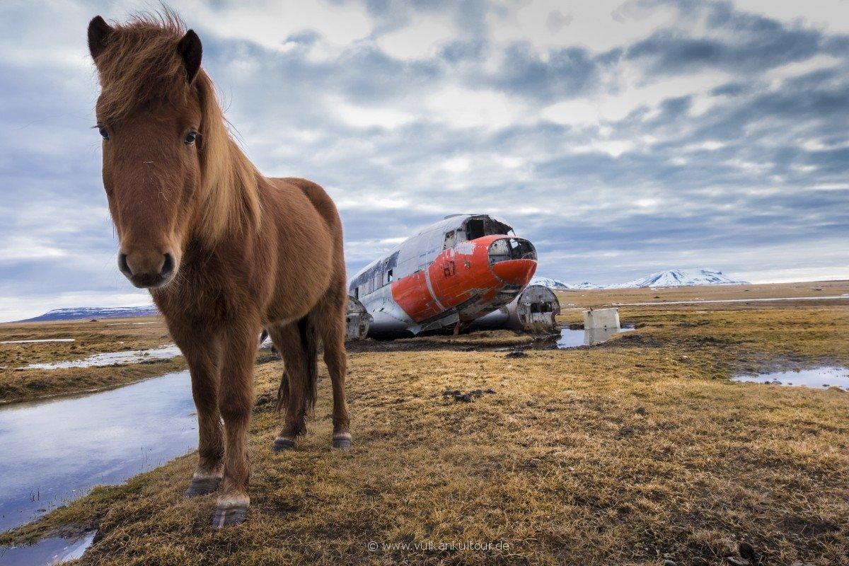 Altes Flugzeugwrack bei Þórshöfn (Langanes)