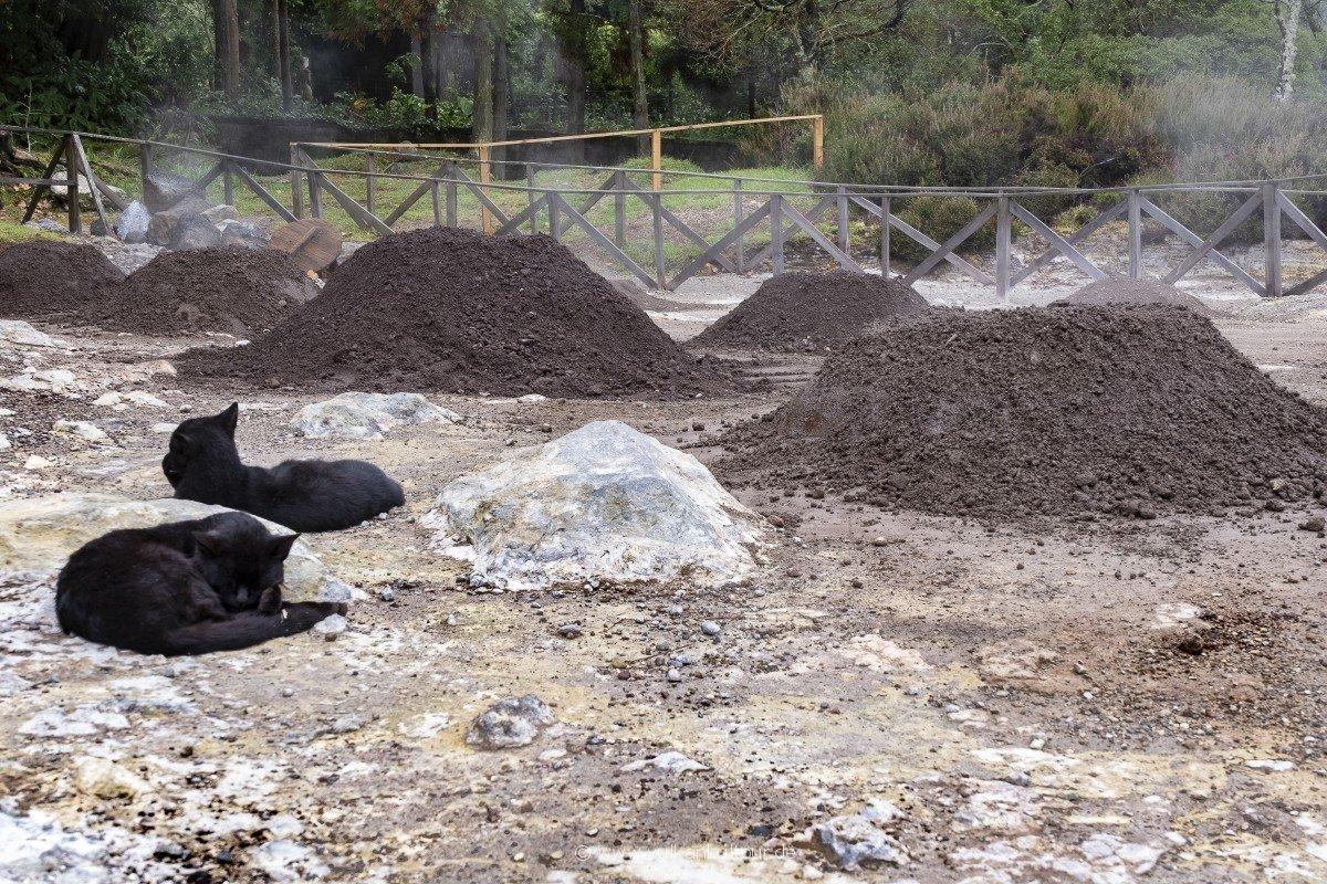 Nicht nur die Katzen nutzen und genießen die Erdwärme! Hier sind die Töpfe des Cozido das Furnas in der Erde vergraben.