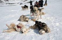 Hundeschlitten-Safari (Foto © Spitzbergen Adventures)