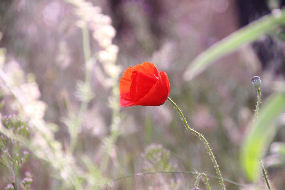 Etna dei Romantici 201605 - IMG_6614