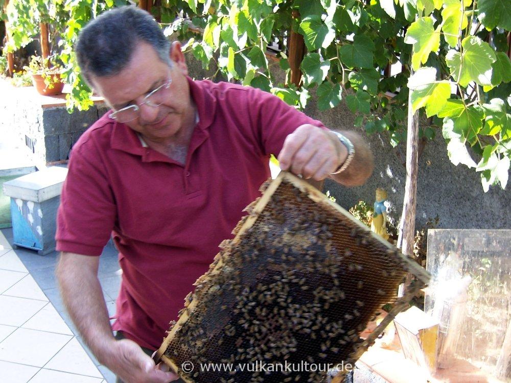 Sebastiano Costa zeigt uns seine Bienen (Oro d'Etna in Zafferana)