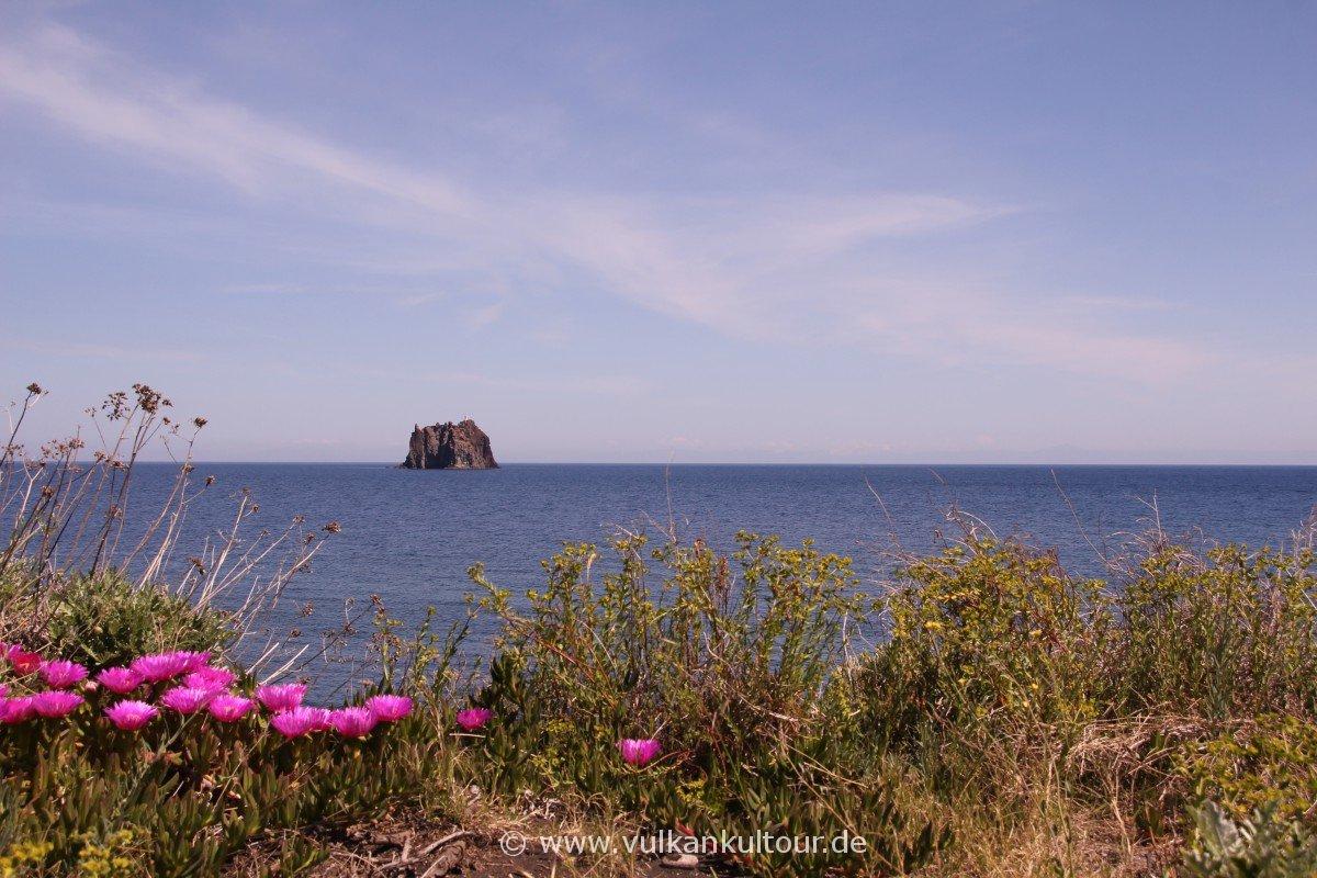 Stromboli - Blick auf den Strombolicchio. Die Insel begrüßt uns mit wärmenden Sonnenstrahlen und üppigen Blüten...