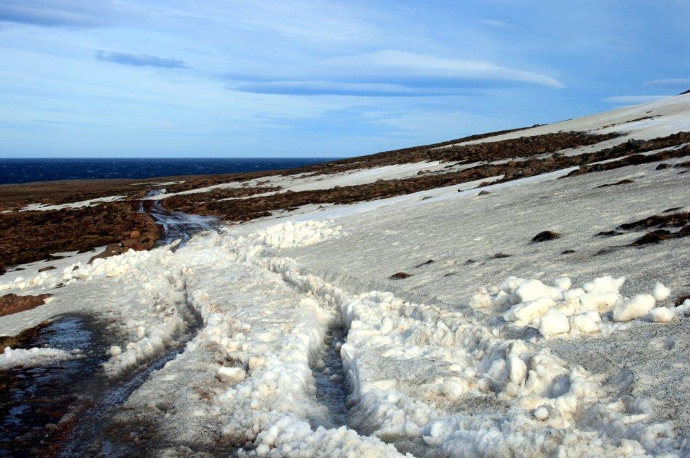 Schneewechte auf Langanes
