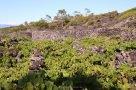20160811 Azoren Pico Weinbau