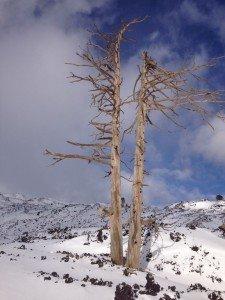 Etna Nord - Skitour