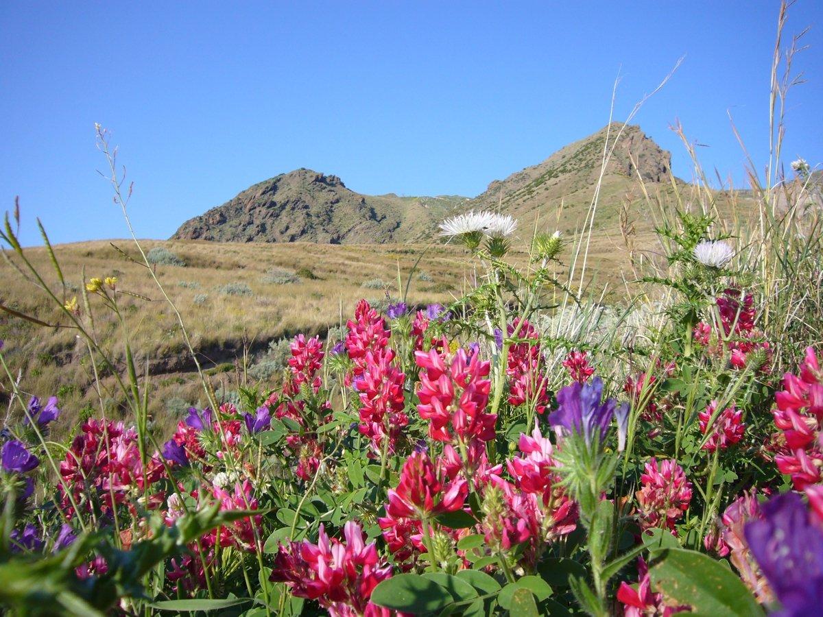 Blütenpracht an der Westküste Liparis (© Monika und Uwe Hildebrandt)